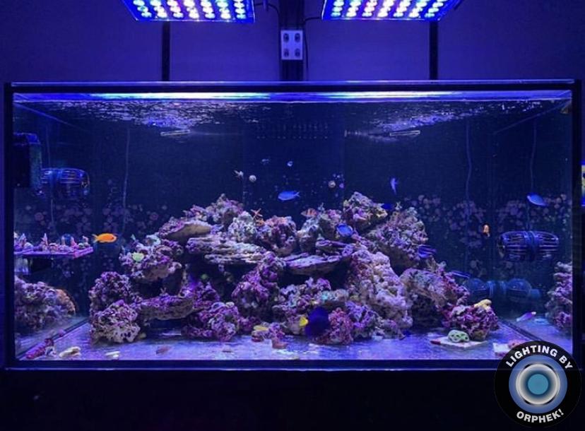 belo recife de coral tanque