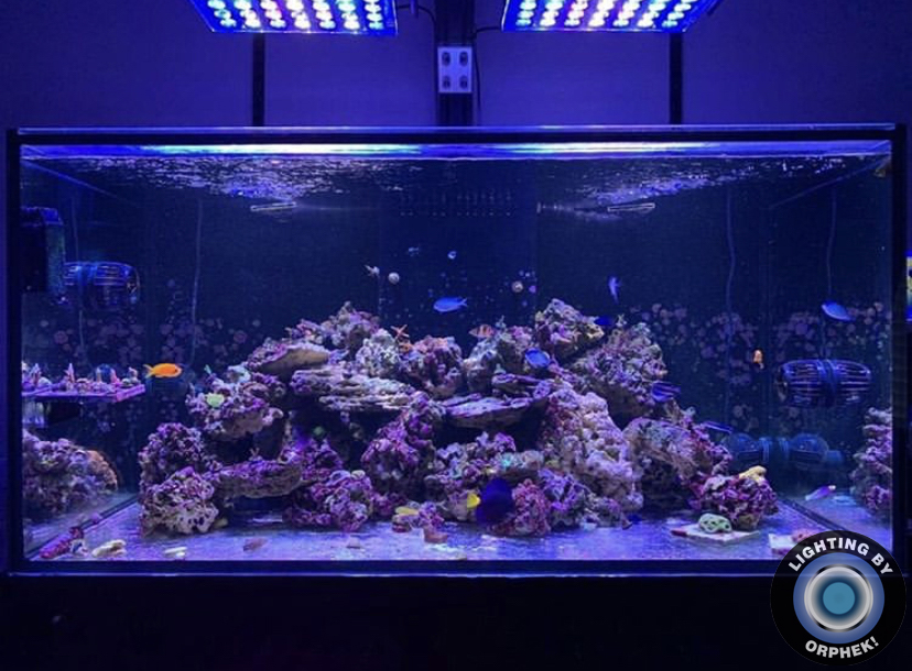 tangki karang karang yang cantik