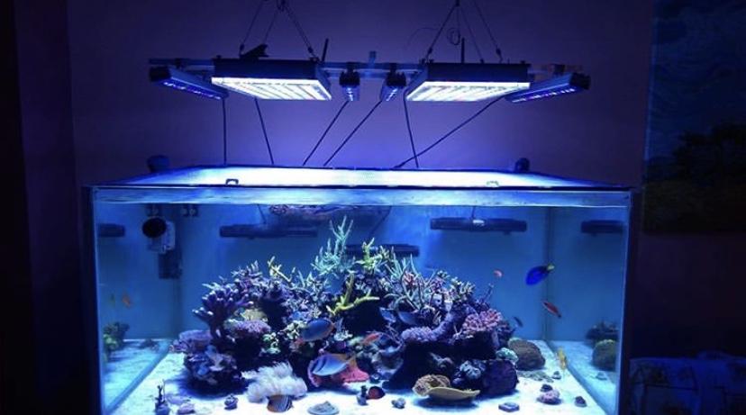 melhor iluminação do aquário de água salgada