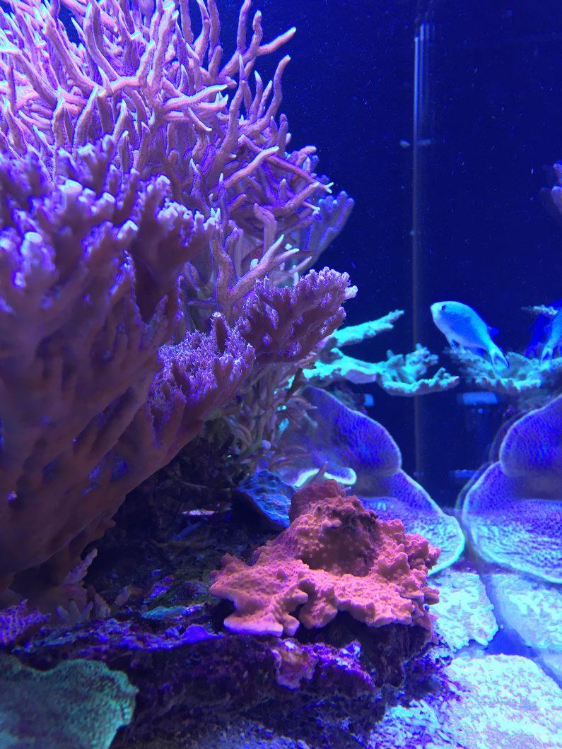 récif d'eau salée corail pop meilleures lumières
