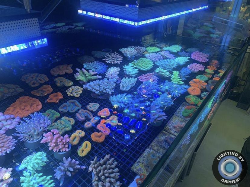 orphek melhor recife de iluminação led