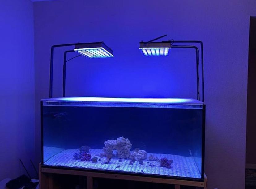 melhor iluminação do tanque de água salgada 2020