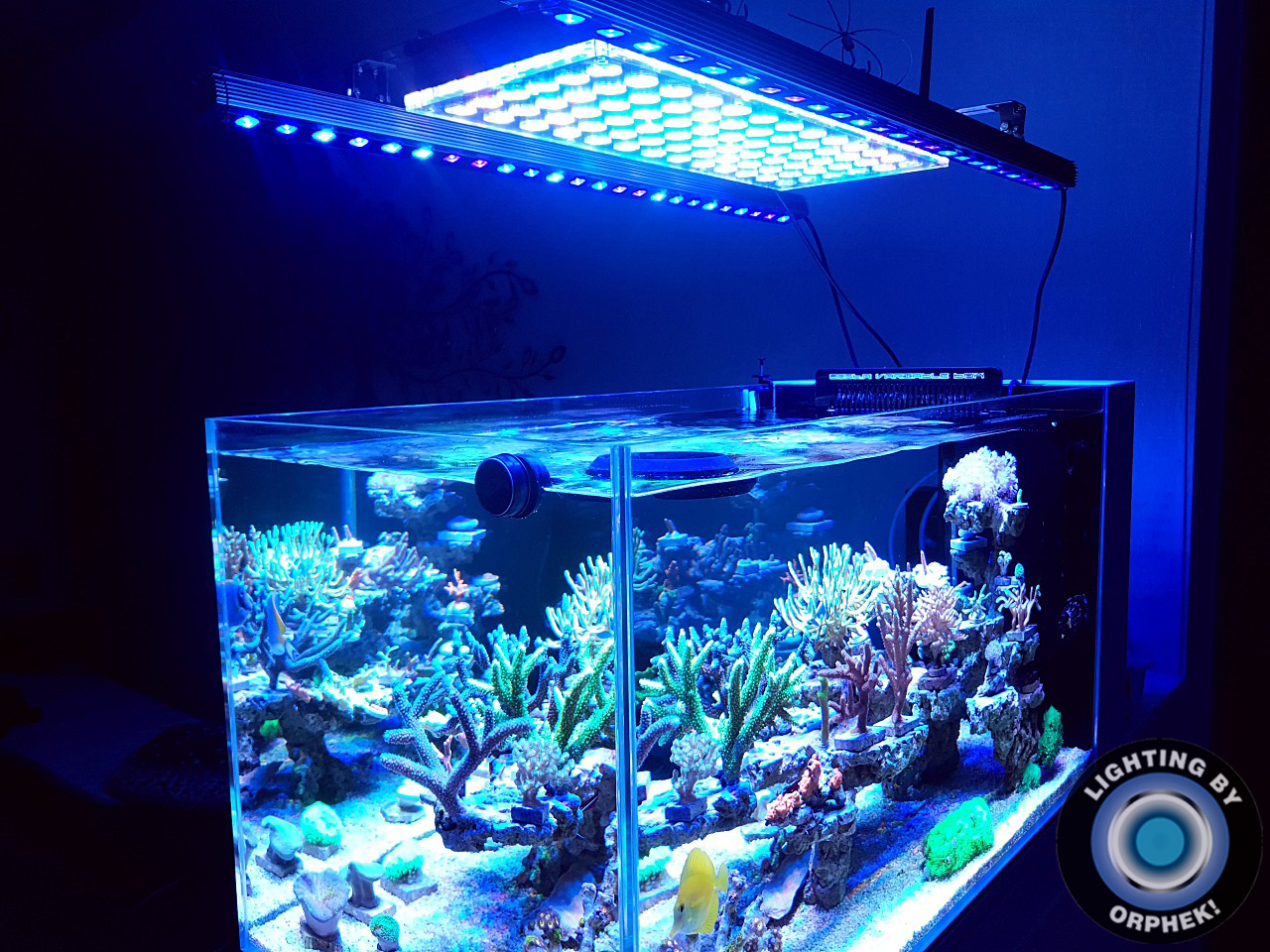 Best-reef-aquarium-LED-light