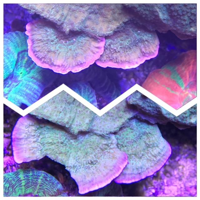 iluminación de cultivo de coral de alta calidad