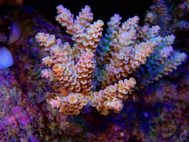 2020 أفضل أضواء sps تزايد الشعاب المرجانية