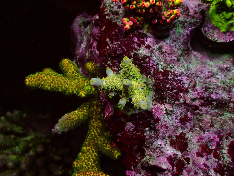 مدهش خزان الشعاب المرجانية البوب