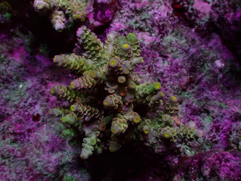 أفضل المصابيح دبابات المرجان البوب