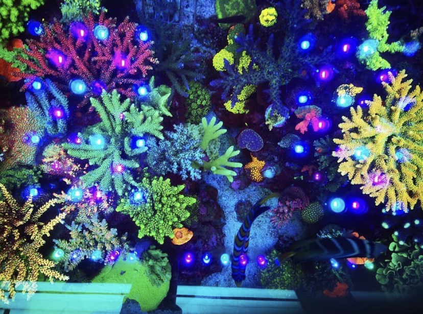 mejor sps coral pop luz led