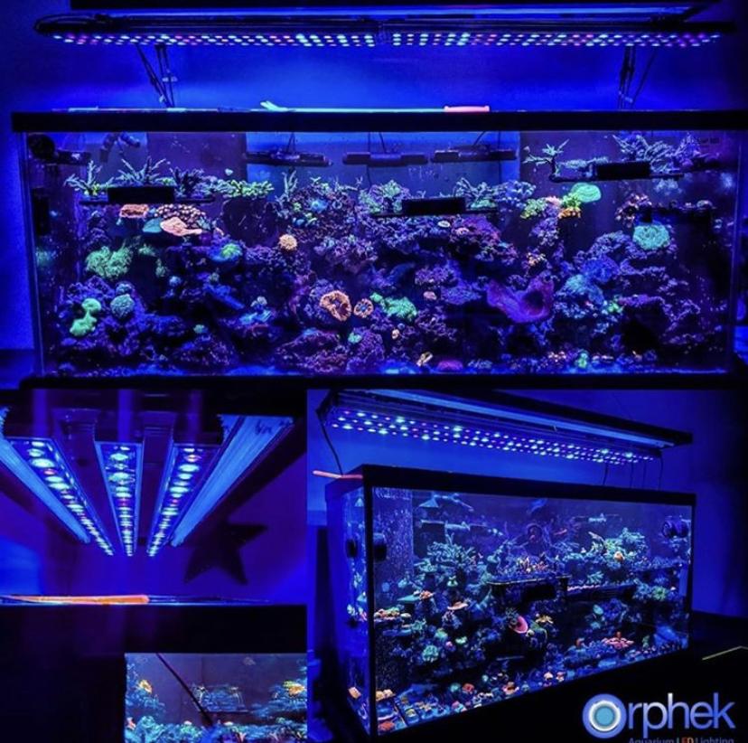 tanque de arrecife público mejor iluminación orphek