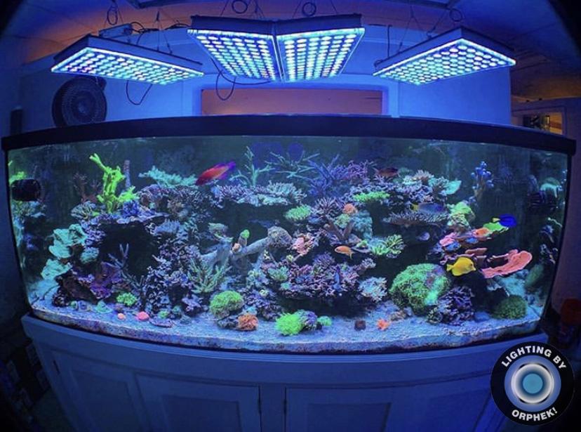 mejor luz de acuario de arrecife orphek atlatnik 2021
