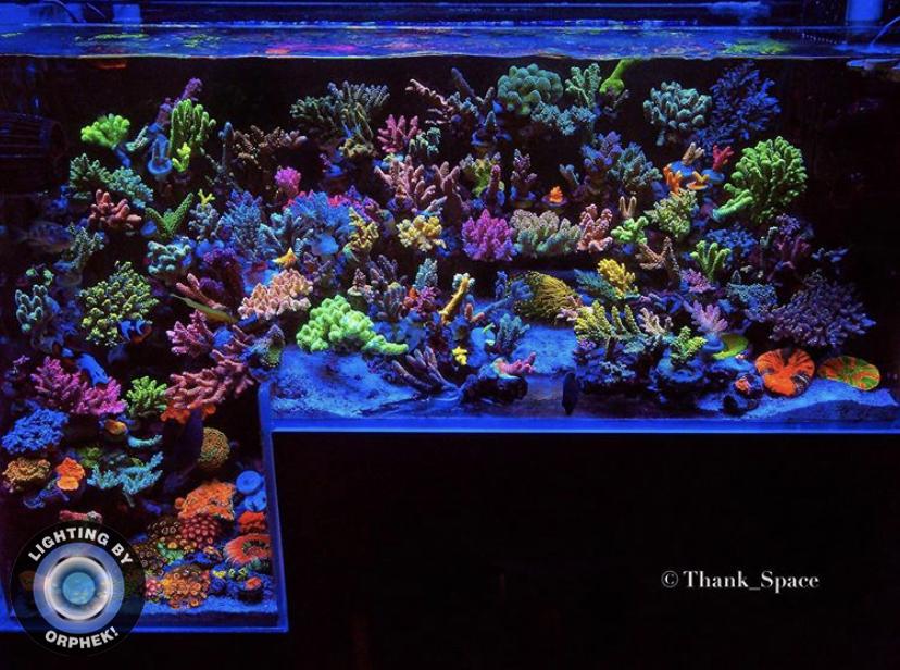 melhores luzes pop coral tanque orphek