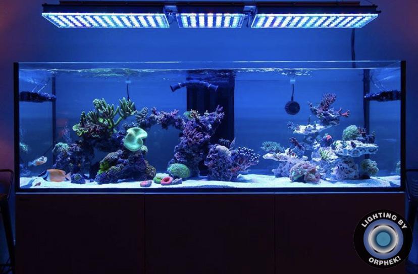 2021 melhor luz LED de aquário orphek atlantik