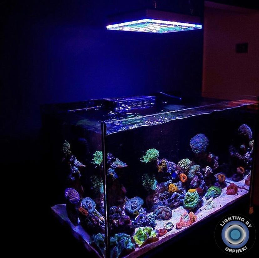 niesamowite oświetlenie LED zbiornika ze słoną wodą
