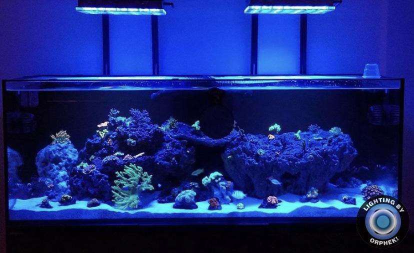 tuzlu su resif tankı led ışıkları orphek