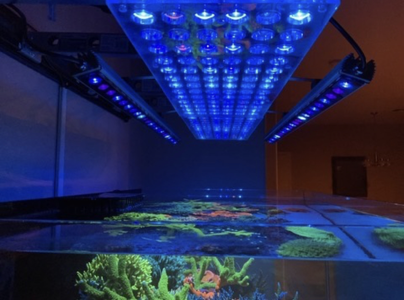 akvarium korall pop beste LED bar 2021