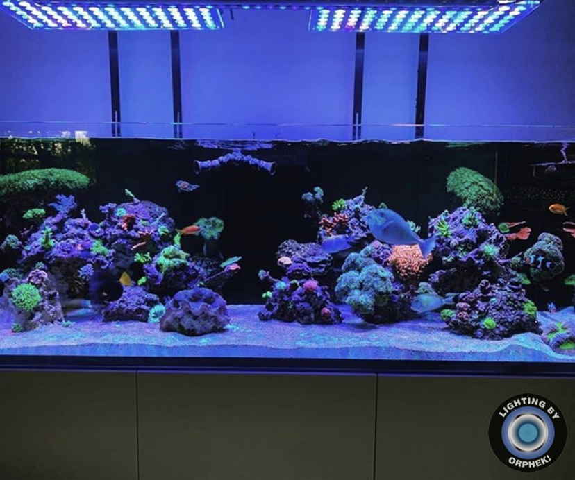 2021 Top Coral Pop LED Light Orphek