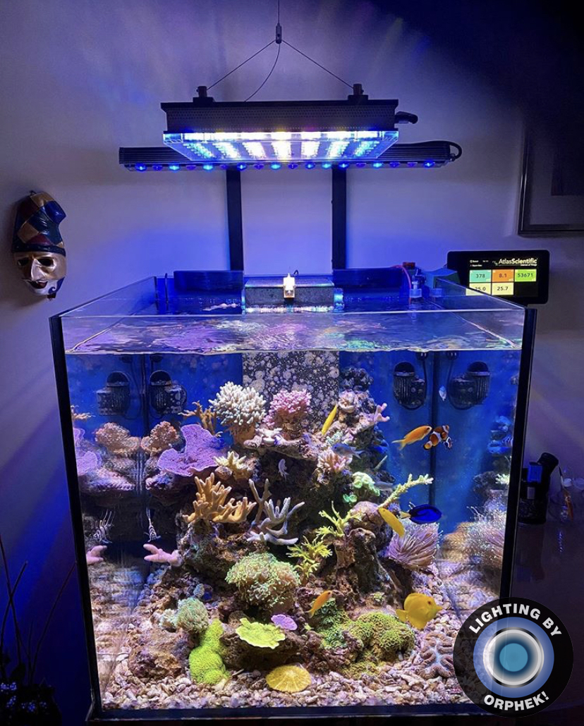 mejor luz de crecimiento de coral orphek atlantik v4