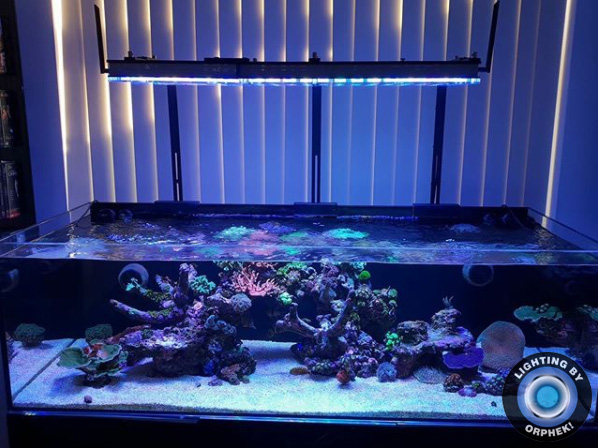 iluminación llevada del arrecife del tanque de agua salada