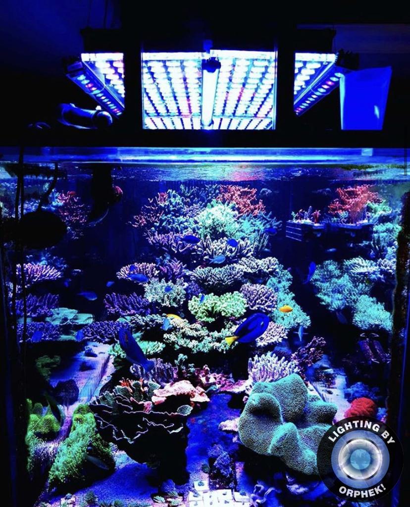 iluminação LED de aquário de alta qualidade 2021