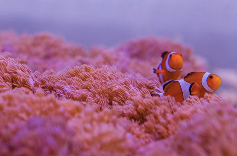 najlepsze oświetlenie LED rafy koralowej lubphek