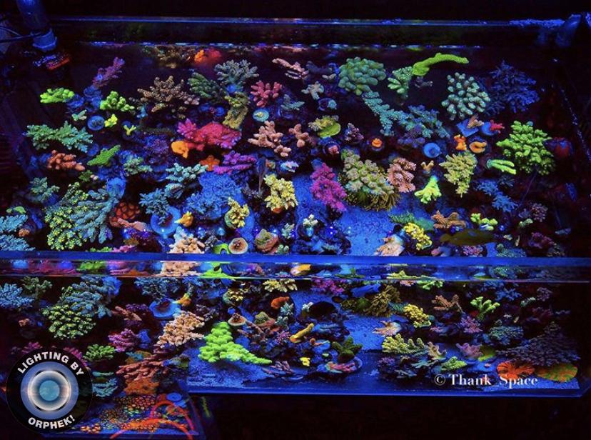 o aquário superior do recife da água salgada conduziu luzes