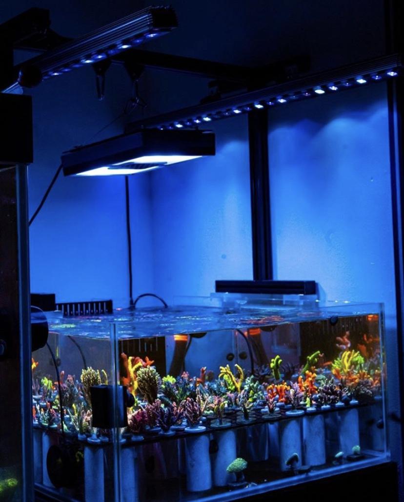 светодиодная панель лучших цветов коралла