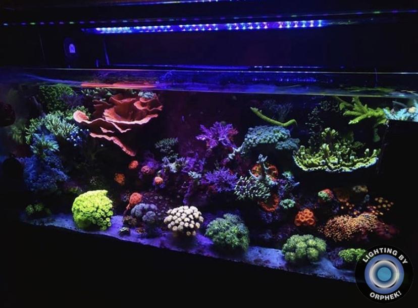 la mejor iluminación increíble del arrecife de coral