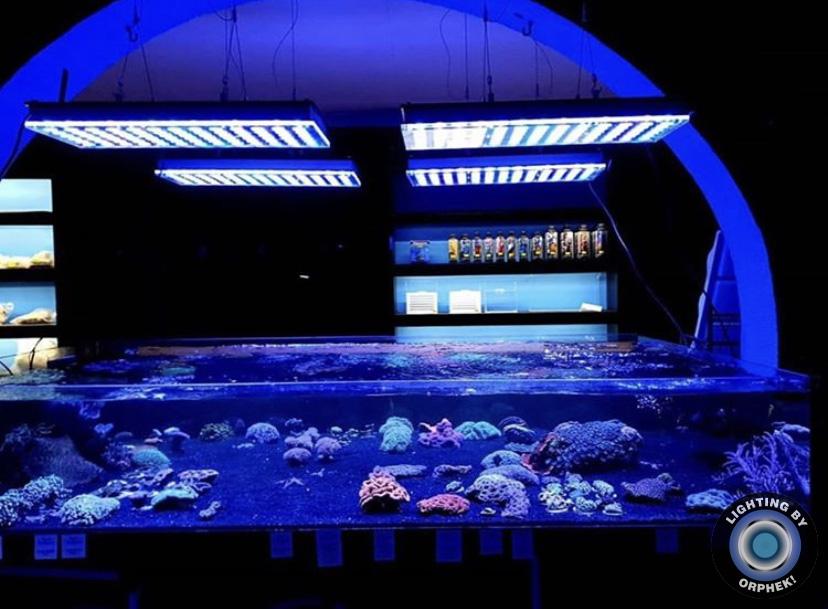 incríveis corais de aquário de recife