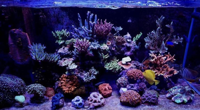 arrecife de agua salada corales mejores luces