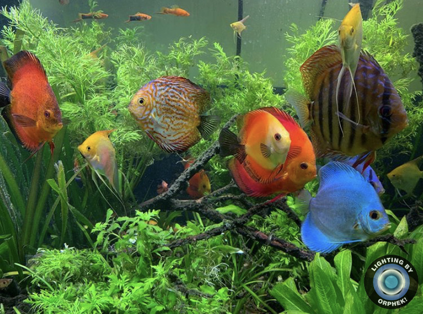 piękne akwarium z paletkami