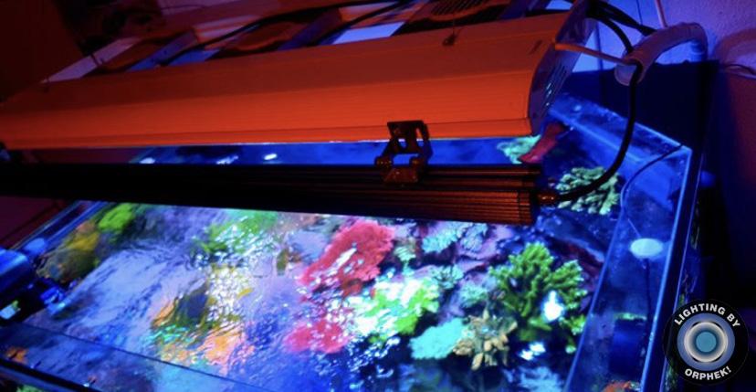 лучший коралловый поп светодиодный бар 2021