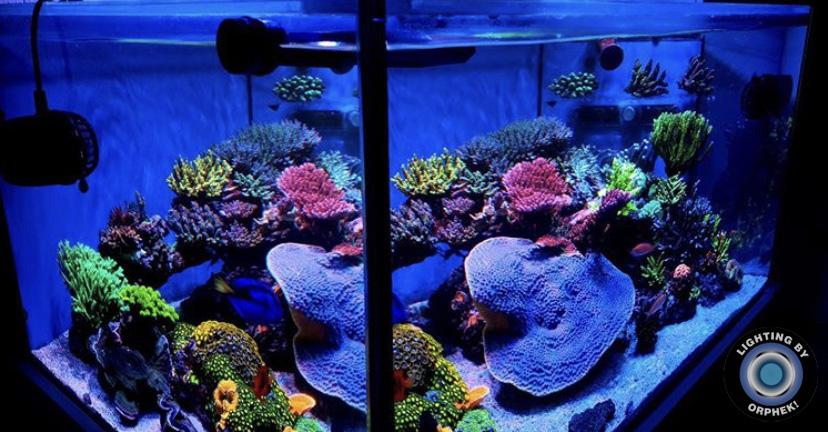 o melhor tanque do recife da água salgada conduziu a iluminação