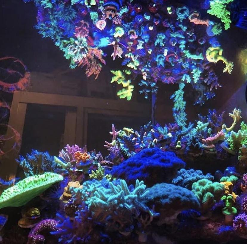 luces de corales de arrecife de agua salada