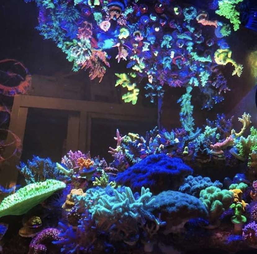 luzes de corais de recife de água salgada