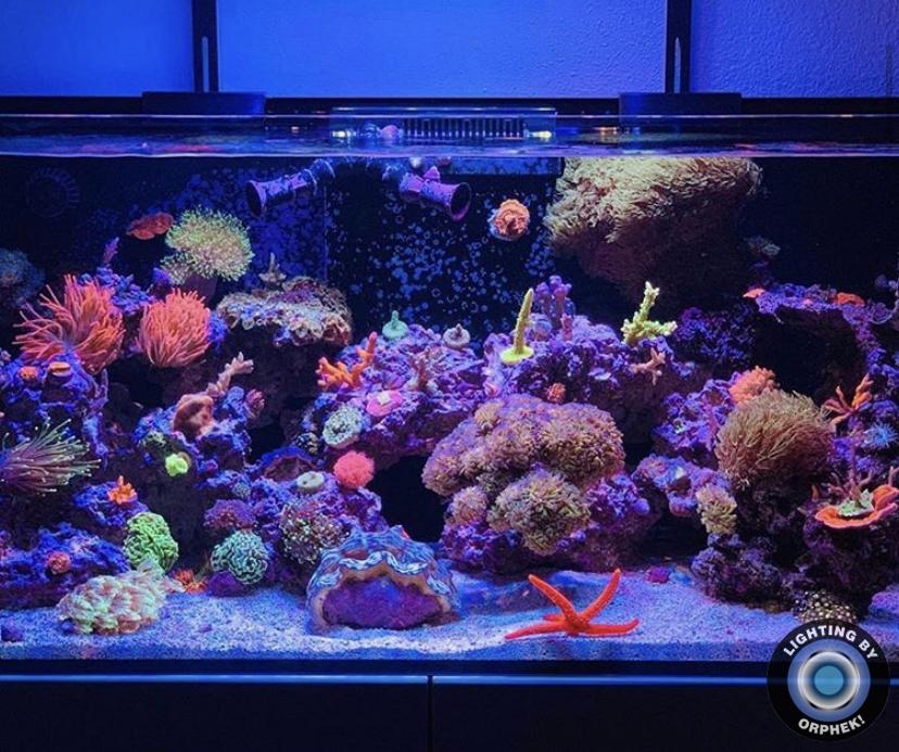 tanque de água salgada recife melhor iluminação LED