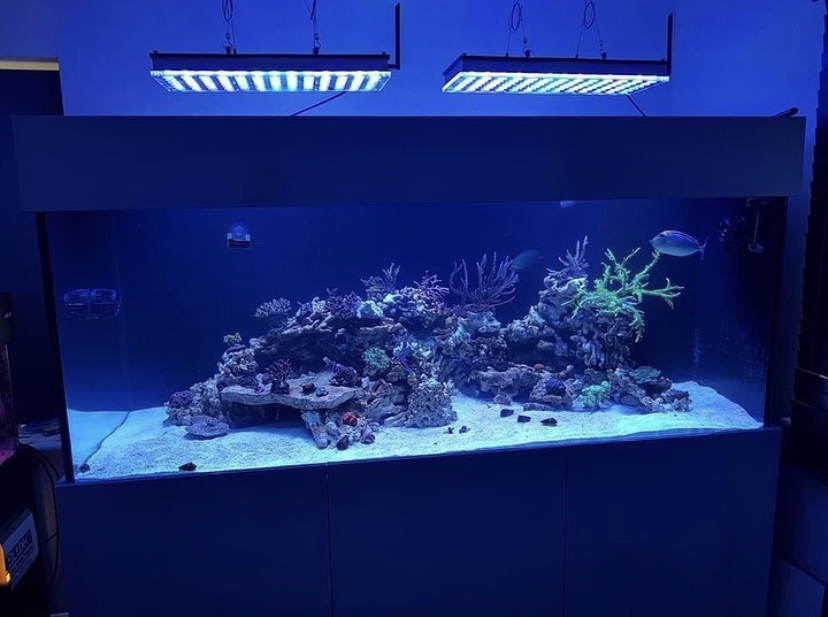 recife de aquário melhores luzes led
