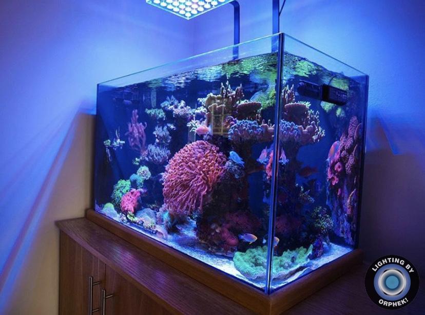 zbiornik ze słoną wodą najlepiej oświetlony diodami LED