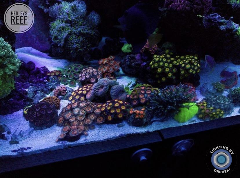 crescita bellissima barriera corallina