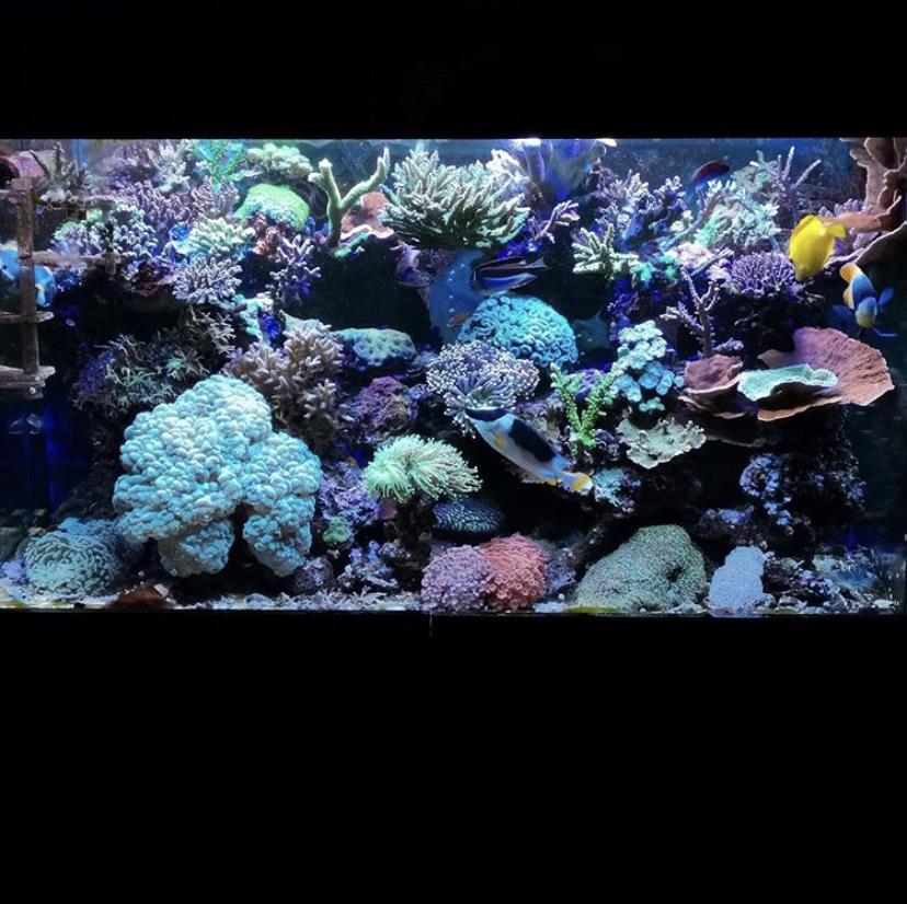 melhores luzes de crescimento de aquário de coral