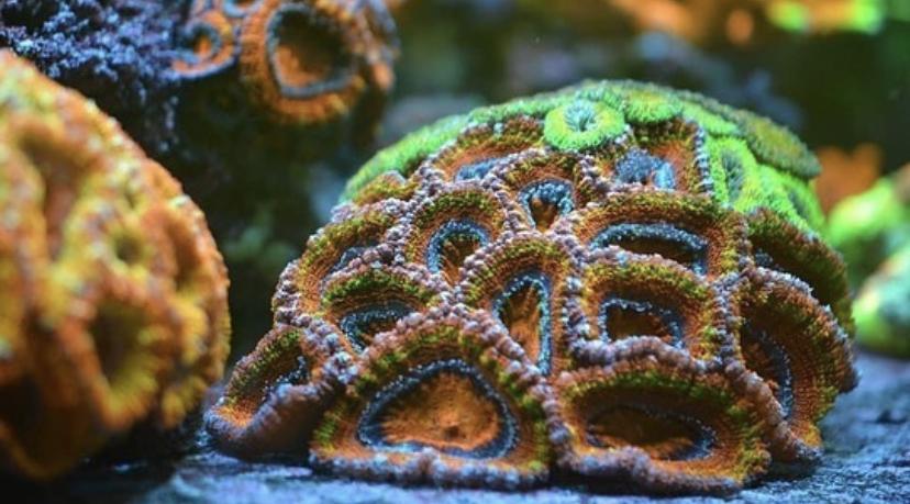 leds de aquário de coral de alta qualidade