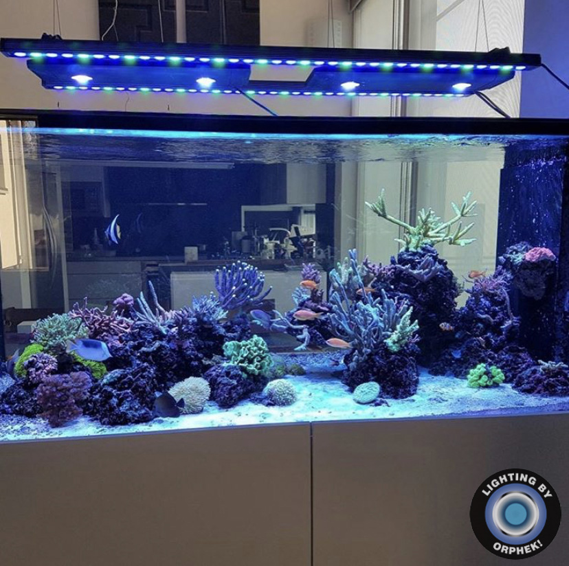 Reef Aquarium se beste geleide bars 2021