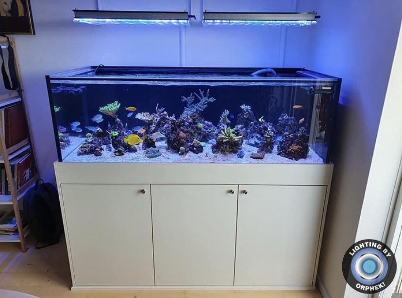 melhor aquário de recife de água salgada levou iluminação