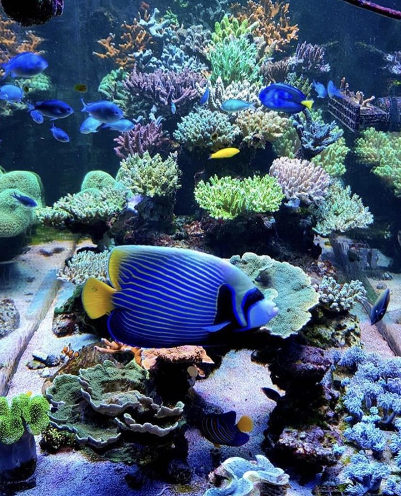 atlantik v4 2021 mejor coral pop LED