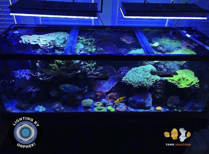 orphek atlantik 2021 melhor recife led