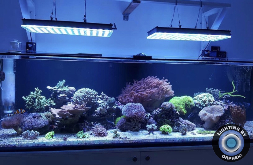 melhor iluminação LED aquário 2021