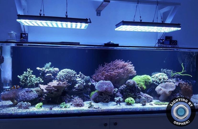 beste LED Aquarienbeleuchtung 2021