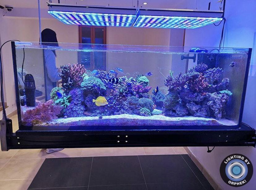 forte recife luz do aquário orphek atlantik