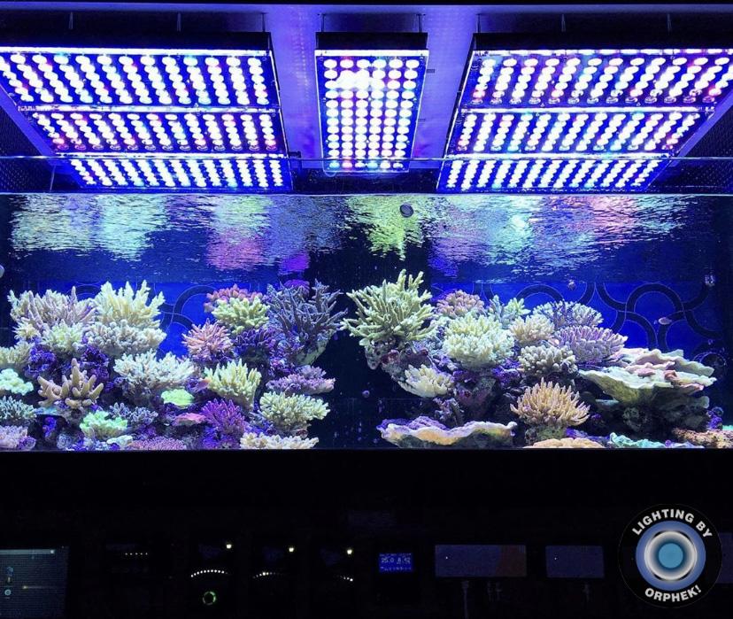 tanque de arrecife público mejor iluminación 2021