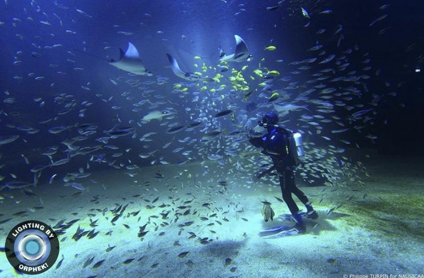 mejor acuario público luz led 2021