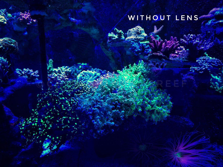 greben akvarij